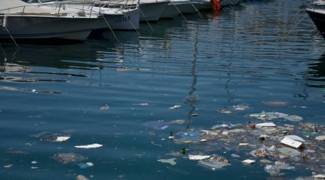 Mosselen lusten geen plasticsoep